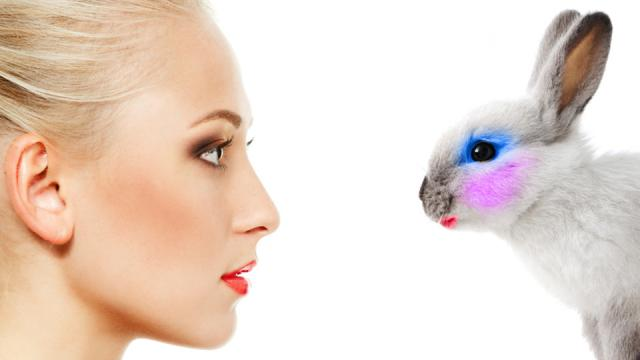 MEPs vote for global ban on cosmetic animal testing