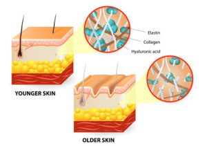 Collagen in young and older skin
